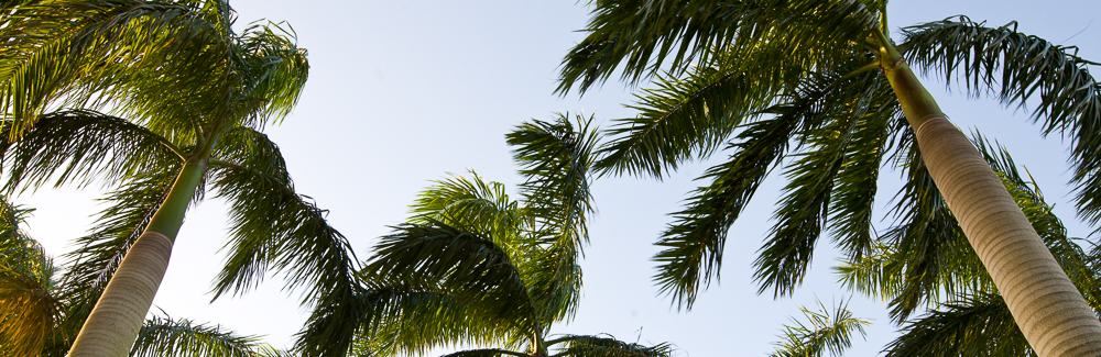 Palm_Production-1000x350