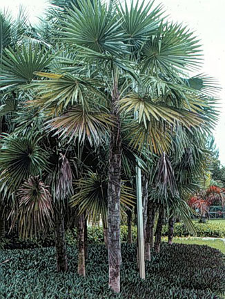 Palm Portrait Gallery - University of Florida, Institute ...